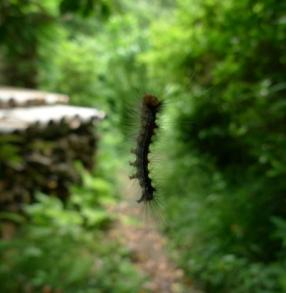 levitating-caterpillar_scaled